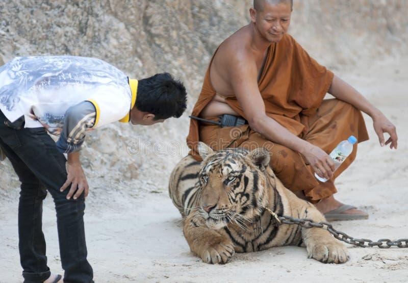 Tygrysia świątynia zdjęcia royalty free