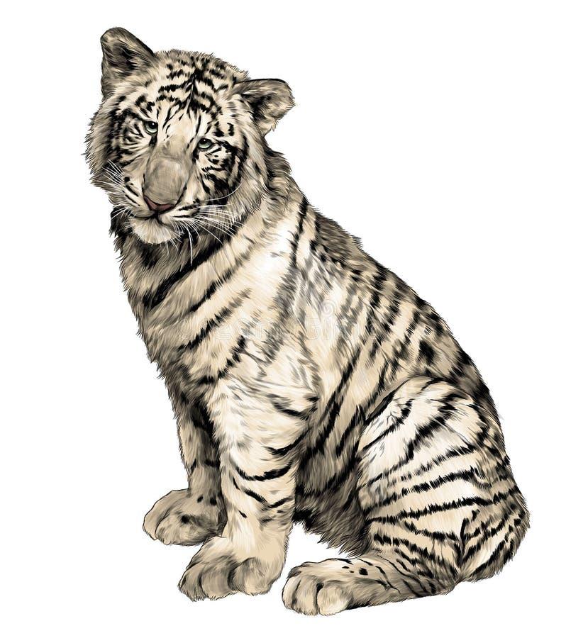 Tygrysia siedząca pełna długość ilustracji