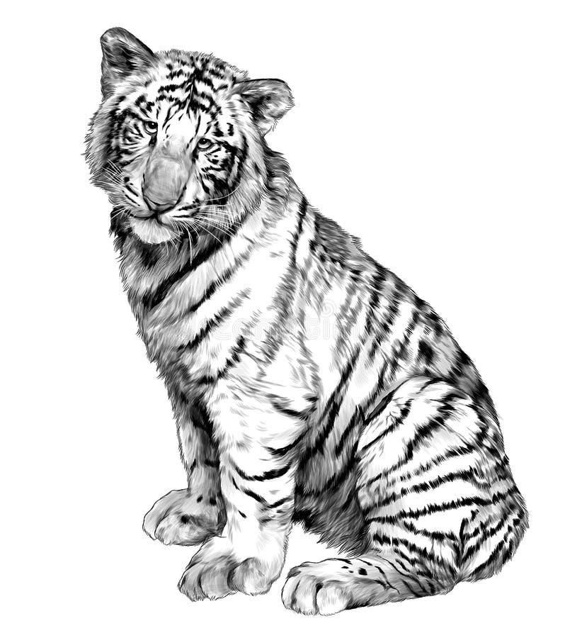 Tygrysia siedząca pełna długość ilustracja wektor