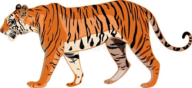 tygrysie Bengal serie royalty ilustracja