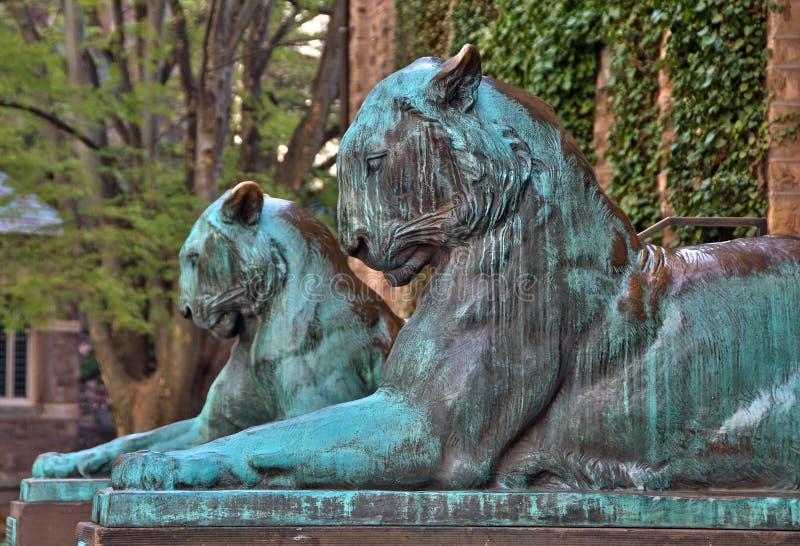 Tygrysie statuy przy uniwersytet princeton zdjęcia stock