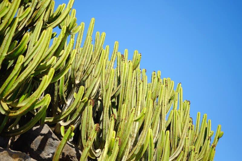 Tyicalcactussen op de Canarische Eilanden Lanzarote, Spanje stock foto