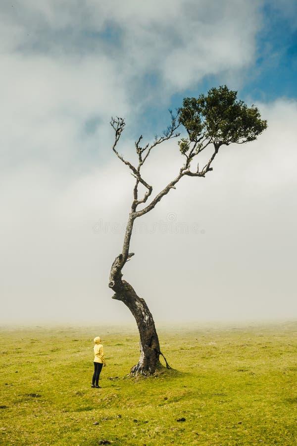 Tylko ja i natura zdjęcia stock