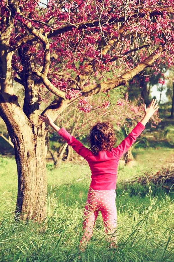Tylna strona szczęśliwy dzieciak blisko czereśniowego okwitnięcia drzewa i przygody pojęcia, bada obrazy stock