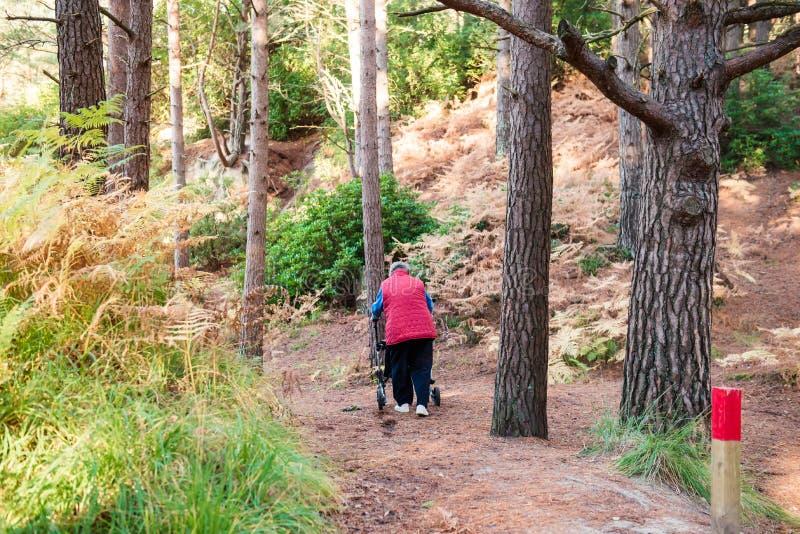 Tylna widoku Samotnie Obezwładniająca starzejąca się żeńska osoba z piechurem podczas jej spaceru w lesie, park Selekcyjna ostroś zdjęcia stock