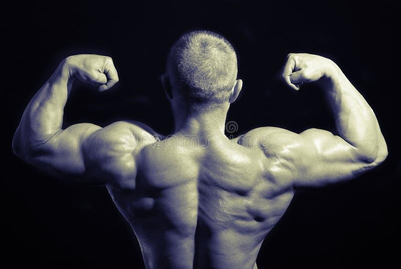 tylni bodybuilders zdjęcie stock