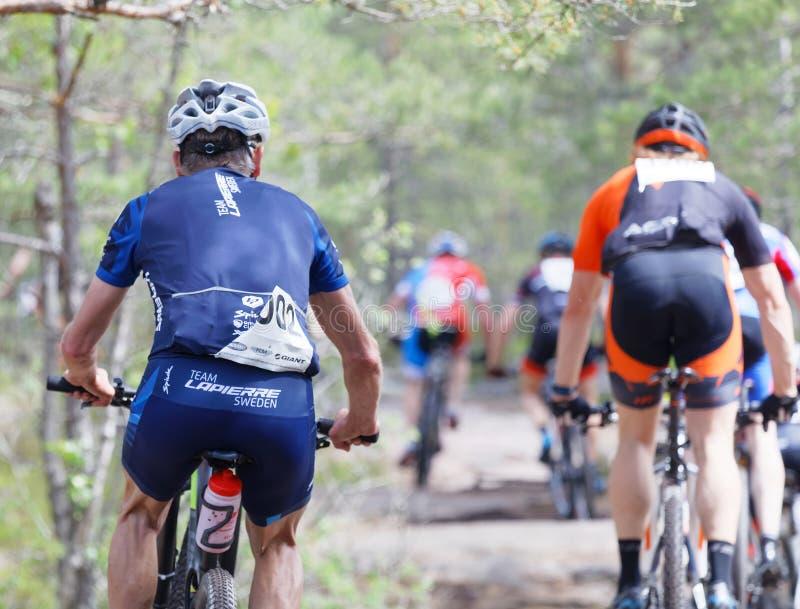 Tylni widok grupa rowerów górskich cykliści w lesie obrazy royalty free