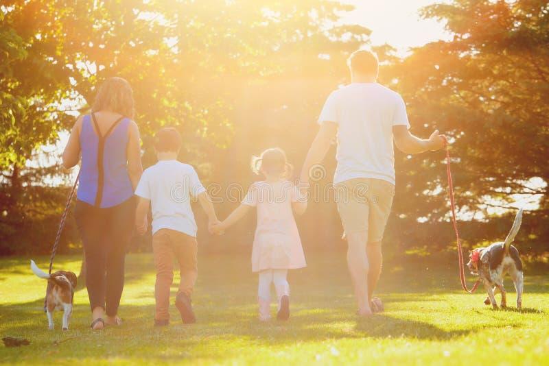 Tylni widok rodzinny odprowadzenie z psami w parku zdjęcia royalty free