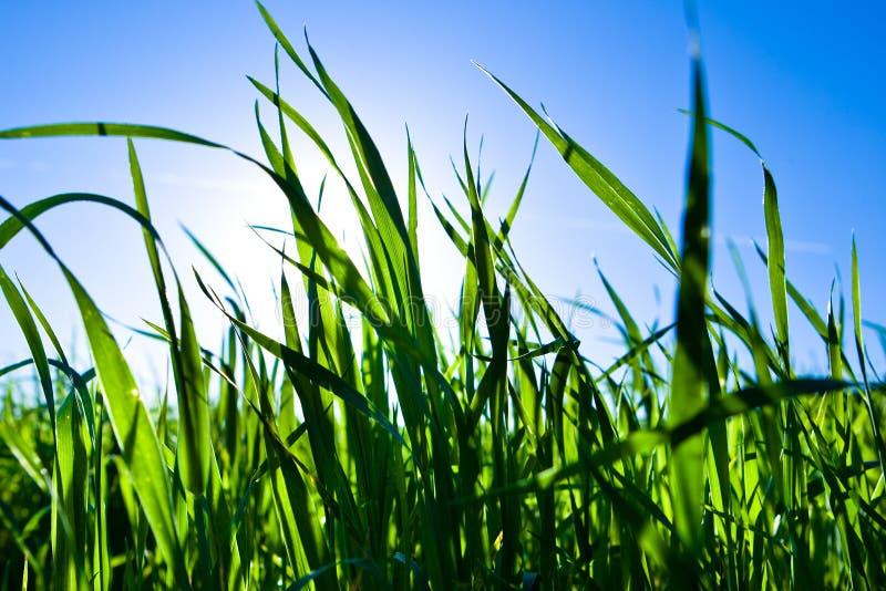 tylny błękitny trawy zielonego światła nieba słońce obraz stock