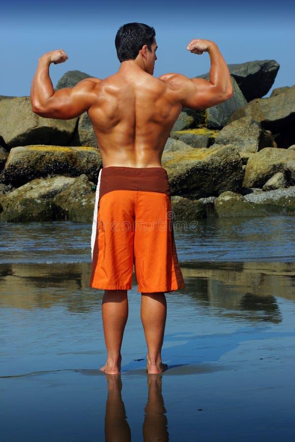 tylny bodybuilder zdjęcia stock