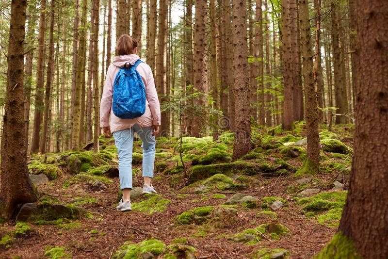 Tylny widok aktywny żeński steemp wspina się ślada w lesie, niesie plecaka, iść w górę wzgórza, ubierającego w przypadkowej kurtc obraz stock