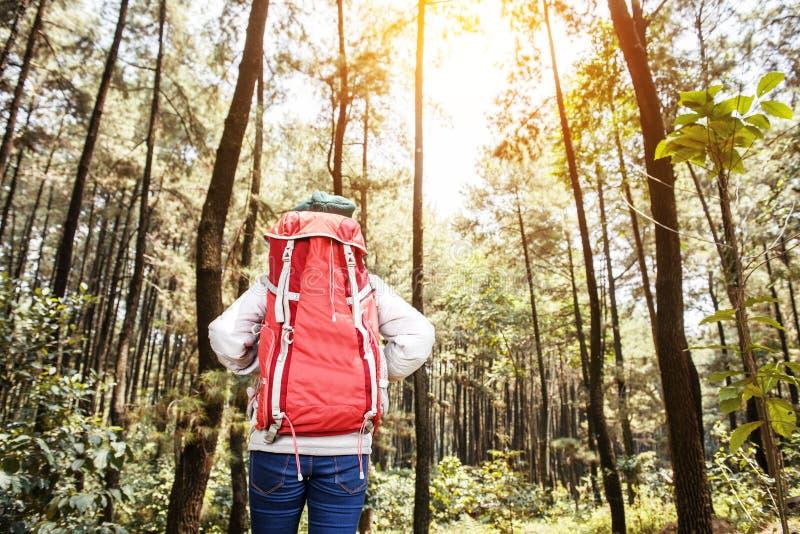 Tylny widok azjatykci żeński backpacker stoi patrzejący widok obraz royalty free
