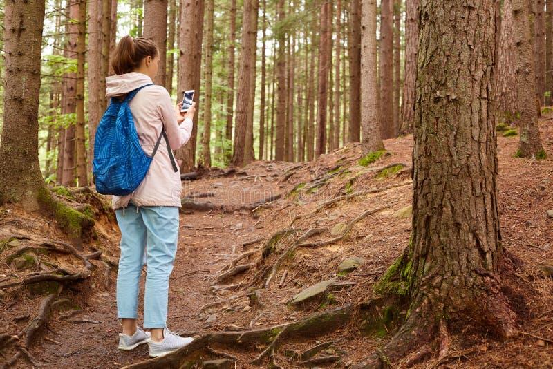 Tylny widok doświadczona podróżnicza pozycja w środku las, dostawać gubjący, szukający wyjście, używać jej smartphone, bierze zdjęcia stock
