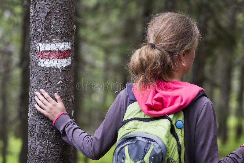 Tylny widok szczupła turystyczna wycieczkowicz dziewczyna z kija i plecaka hol zdjęcia stock
