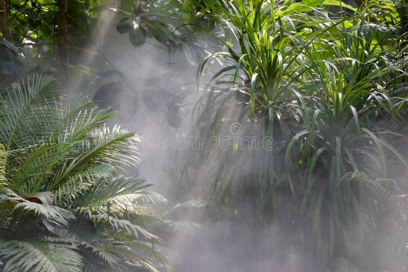 Tyndall-Effekt des Regenwaldes stockfotografie