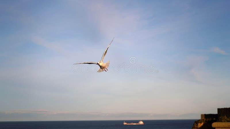 Tynemouth plaża - Biały ptak zdjęcia stock