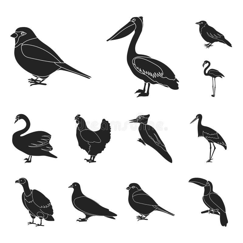 Typ ptak czarne ikony w ustalonej kolekci dla projekta Domowa i dzika ptasia wektorowa symbolu zapasu sieci ilustracja ilustracja wektor