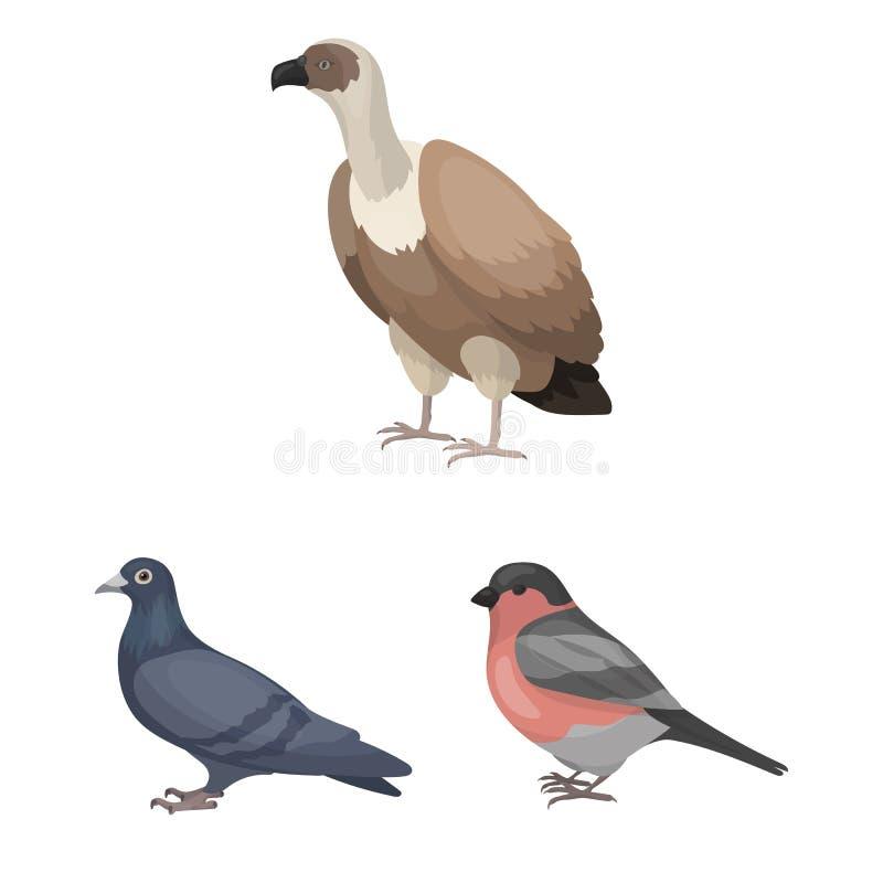 Typ ptak kreskówki ikony w ustalonej kolekci dla projekta Domowa i dzika ptasia wektorowa symbolu zapasu sieci ilustracja ilustracja wektor