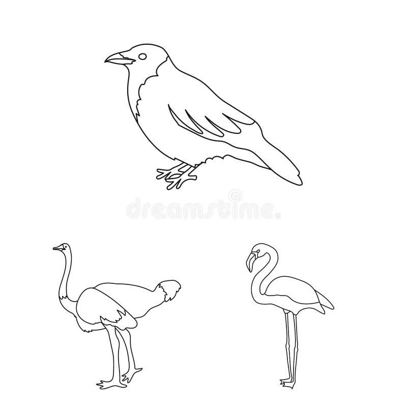 Typ ptaki zarysowywają ikony w ustalonej kolekci dla projekta Domowa i dzika ptasia wektorowa symbolu zapasu sieci ilustracja ilustracji