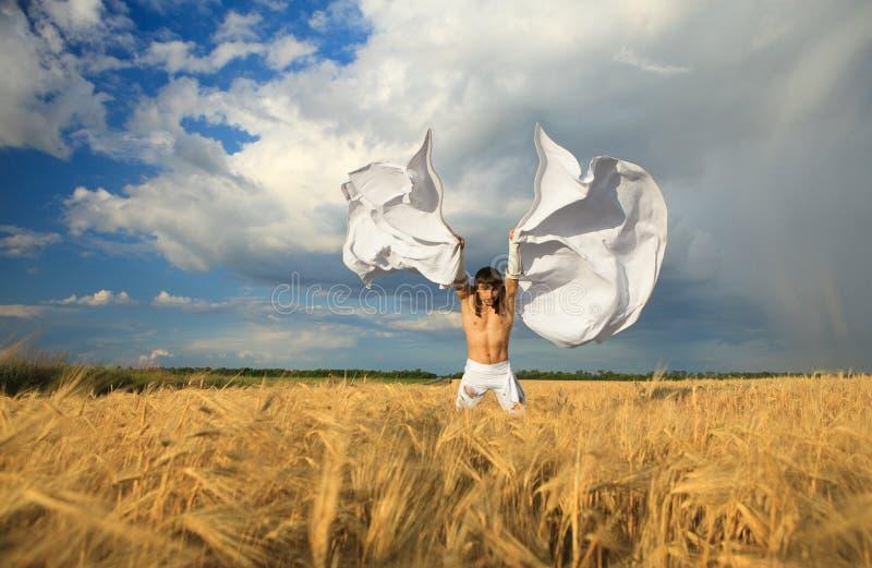 Type avec les ailes blanches sur la zone de blé photographie stock