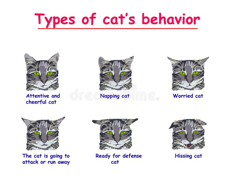 Type of cats behavior on white background. Attentive and cheerful cat, Napping, Worried, cat is going to attack or run. Away, Ready for defense, Hissing cat vector illustration