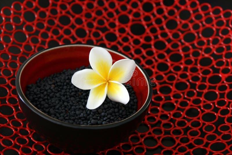 Type d'Asiatique de lentilles images stock