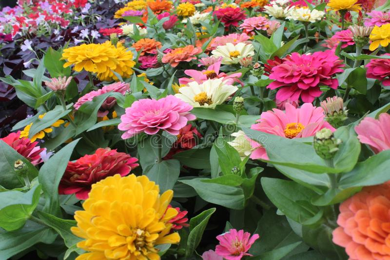 Type différent d'image de fleurs images stock