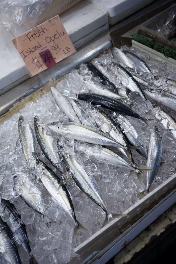 Type frais d'Opelu de poissons dans un magasin photos stock