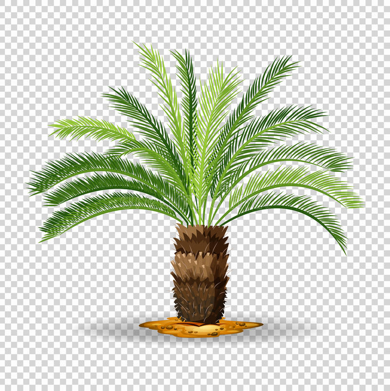 Type of palm tree on transparent background. Illustration vector illustration