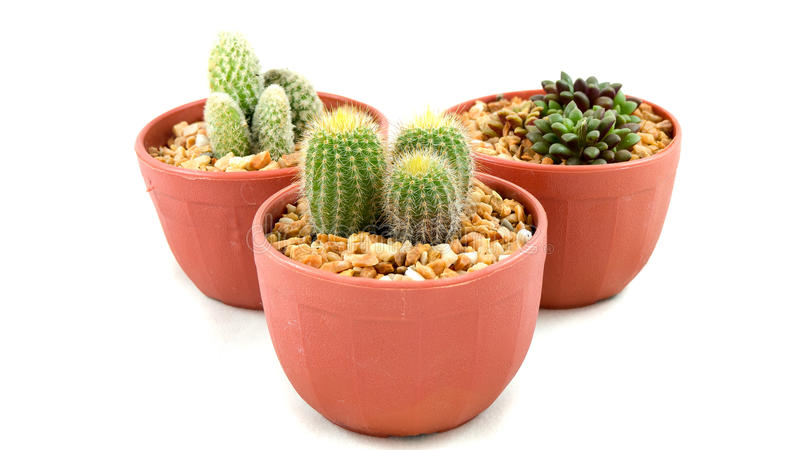 Type trois de cactus dans des pots images stock