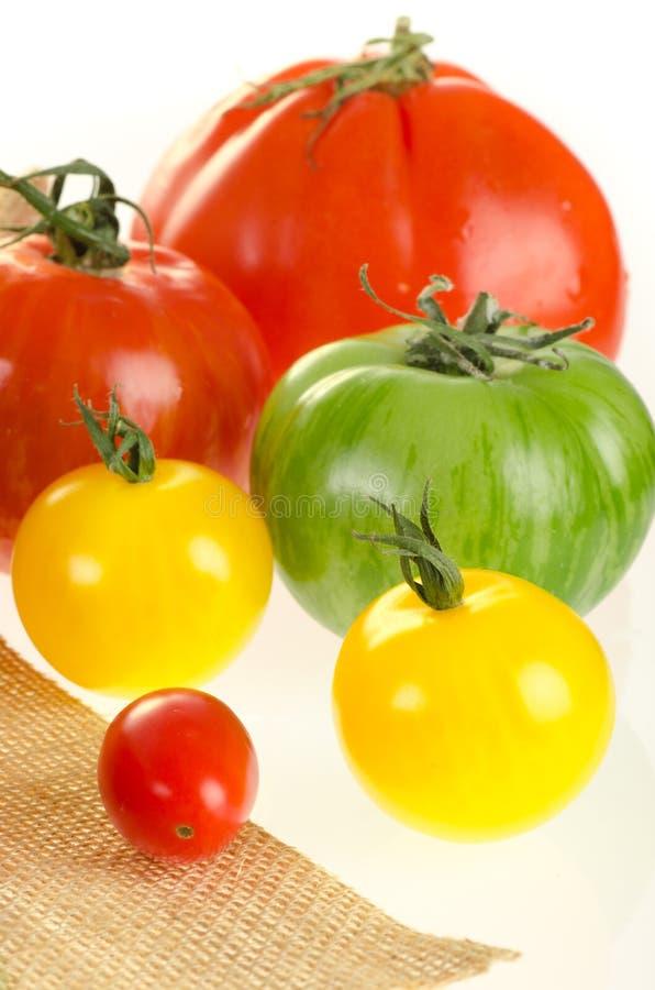 Typer av tomater med sackcloth som isoleras på white royaltyfria bilder