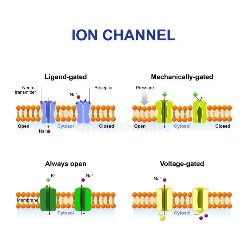 Types de canal d'ion illustration stock