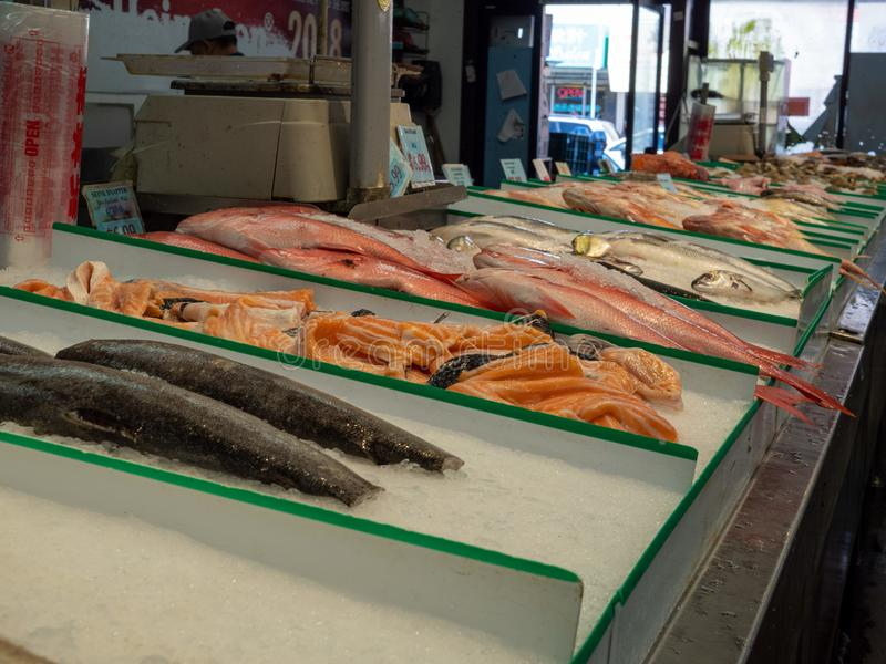 Types of fresh fish sitting on ice in grocery store seafood section for purchase. Different types of fresh fish sitting on ice in grocery store seafood section stock photos