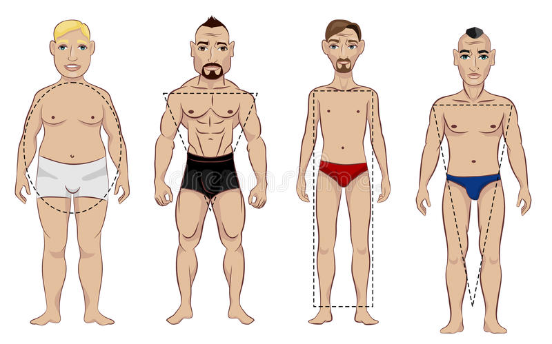 Types of male figure. Vector illustration of a four types of male figure royalty free illustration