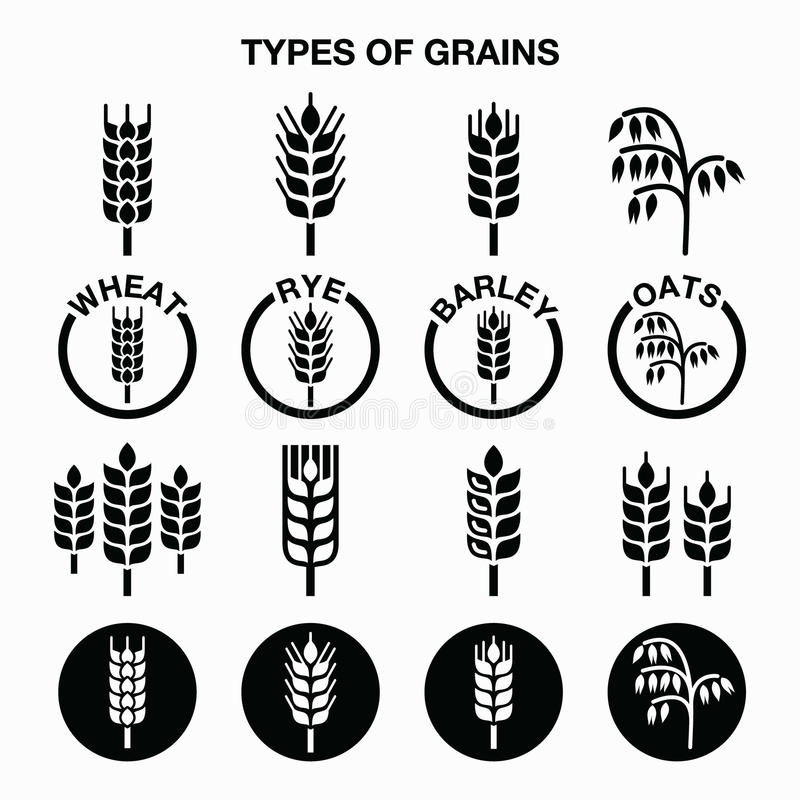 Free Types Of Grains, Cereals Icons - Wheat, Rye, Barley, Oats Stock Images - 56641894