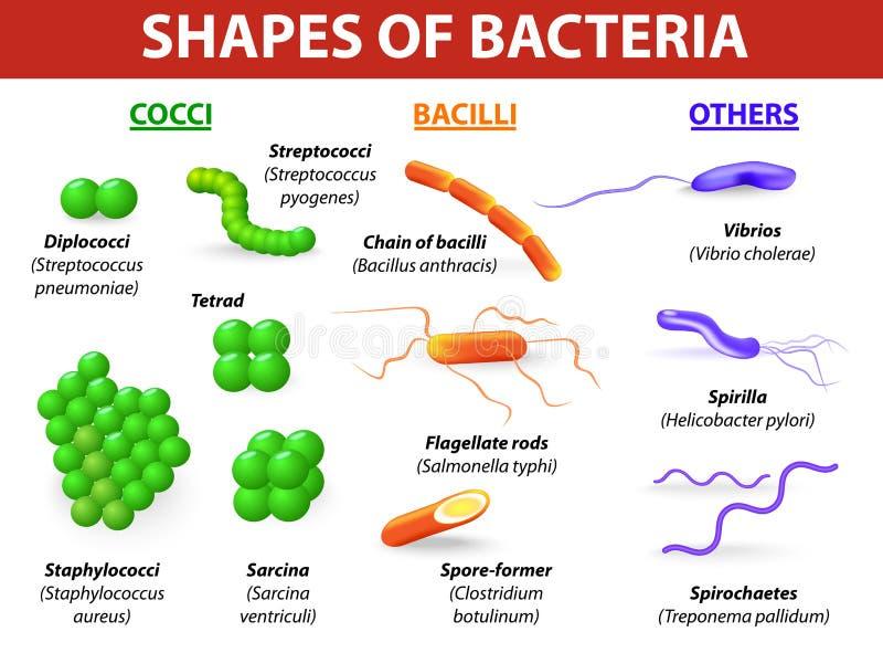 Types van bacteriën royalty-vrije illustratie