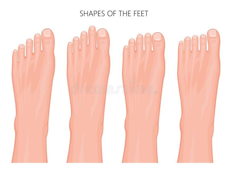 Types van de voorpoot en de tenen stock illustratie