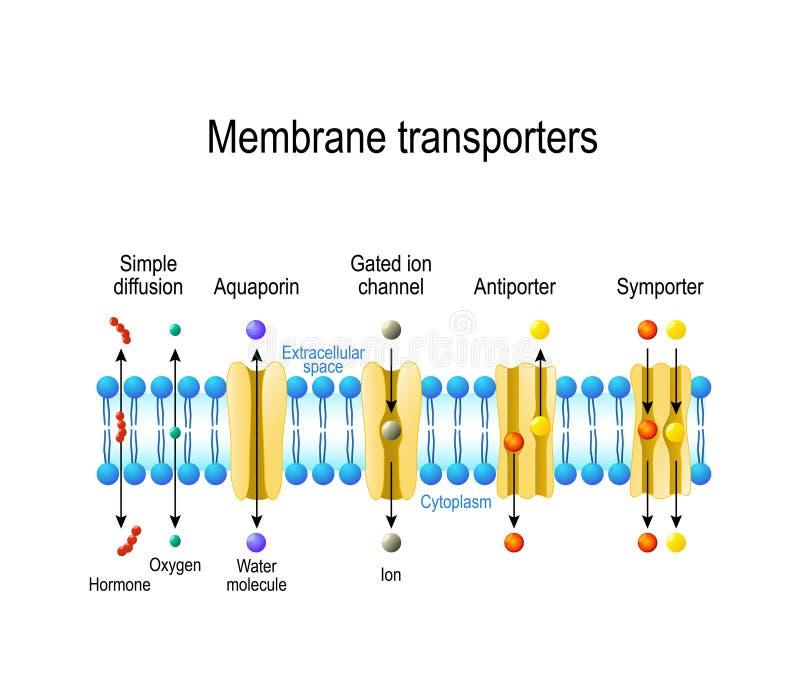 Types van een kanaal in het celmembraan stock illustratie