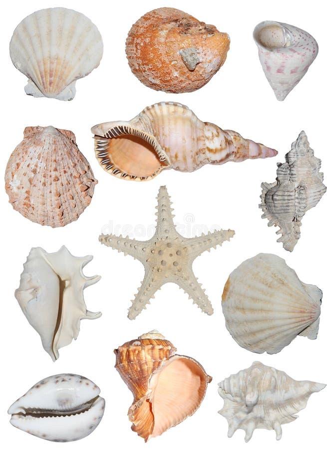 Types van shells   stock fotografie
