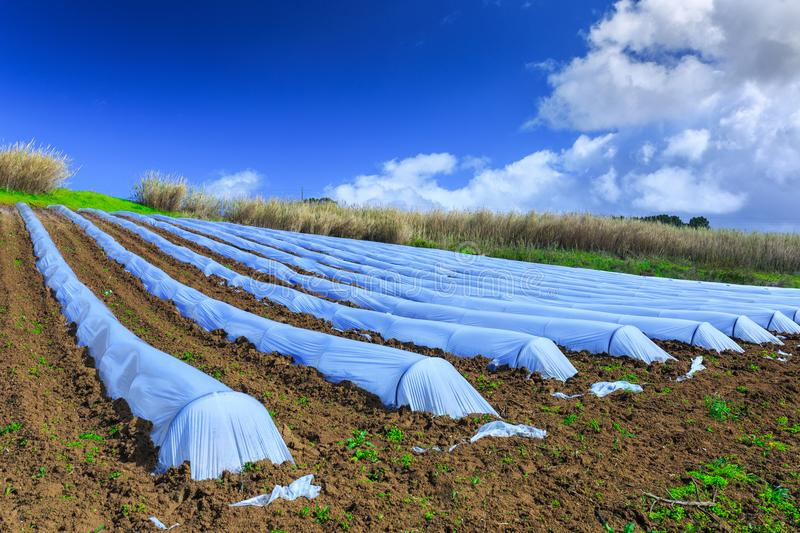 A typical agriculture technology of early spring cultivation of royalty free stock photos