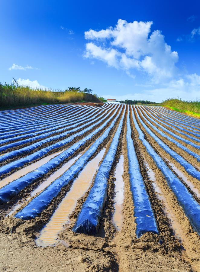A typical agriculture technology of early spring cultivation of royalty free stock image