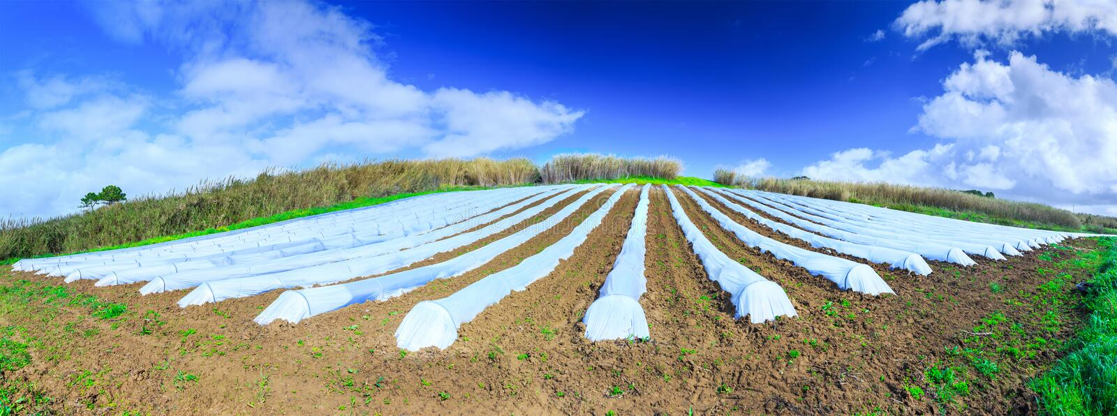 A typical agriculture technology of early spring cultivation of stock photography