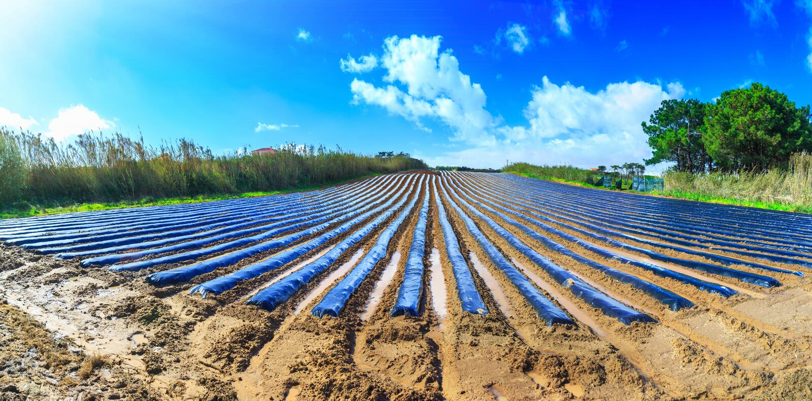 A typical agriculture technology of early spring cultivation of stock photos