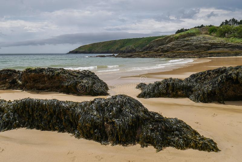 Typical brittany landscape with lonely beach with rocks covered with algae and seaweed and cloudy sky in the background stock photos