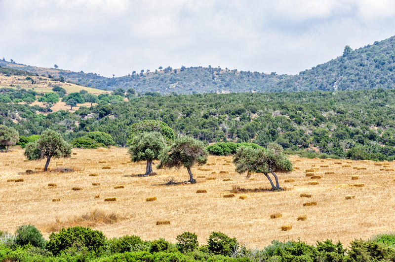 Typical cyprus rural landscape stock image