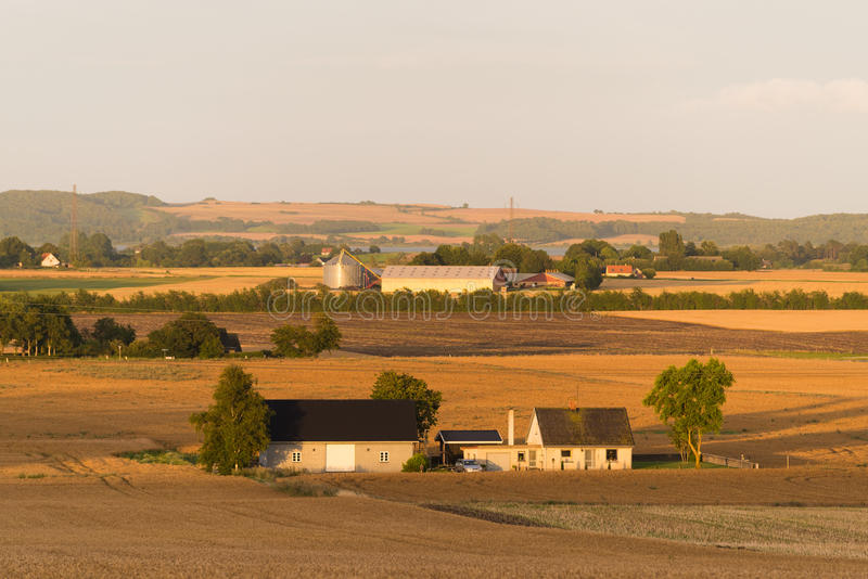 Typical danish landscape. Hilly danish agricultural landscape with lots of wheat fields royalty free stock photos
