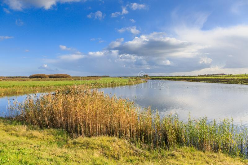 Typical Dutch flat polder landscape. With ponds, Reed belt and canals with old and new bridges against blue sky with scattered clouds stock images