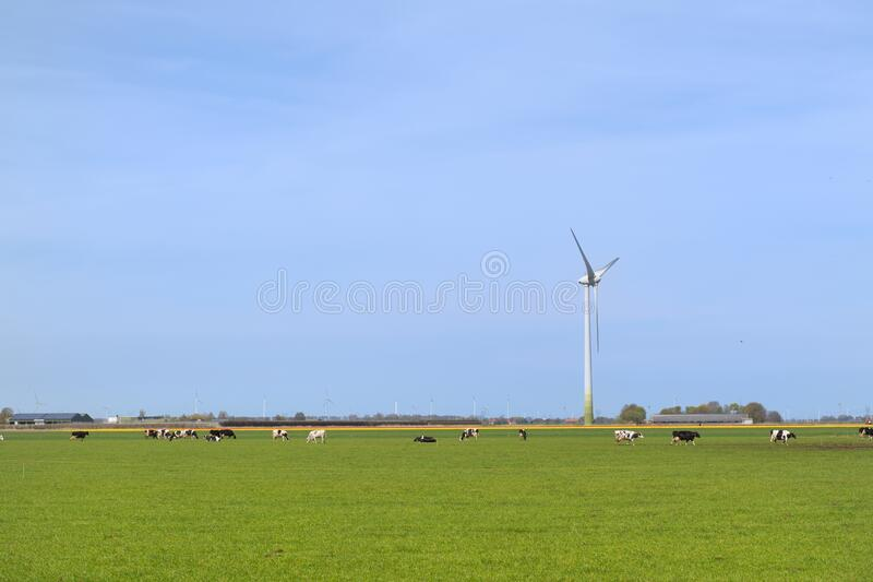 Typical Dutch landscape royalty free stock photography