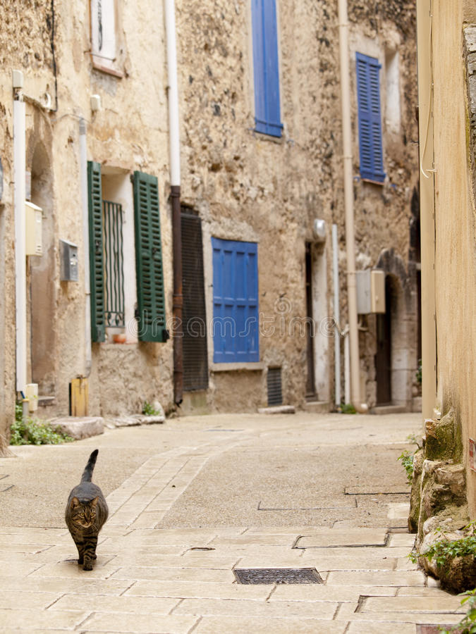 Typical French alley. In a small village with a cat walking through it, focus is on the cat royalty free stock photo