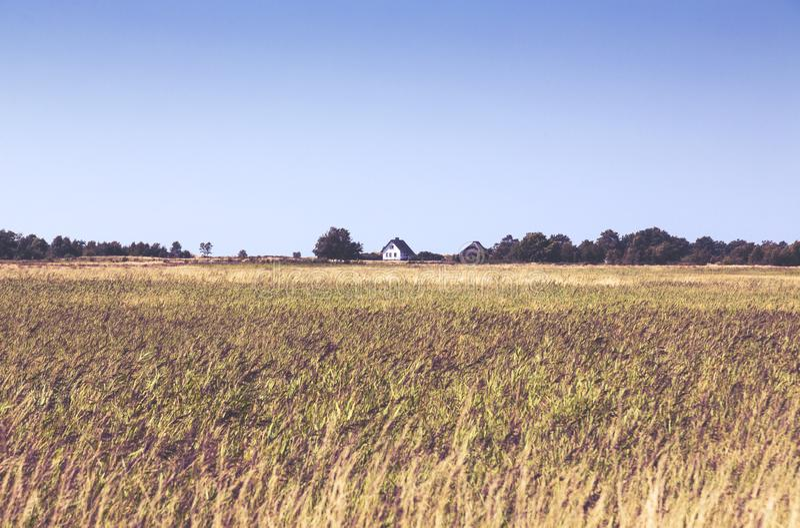Hiddensee heath landscape with white cottage. Typical Hiddensee heath landscape with white cottage stock photo